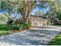 View 13913 Shady Shores Dr Tampa FL